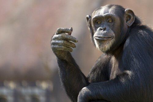 5 animais mais inteligentes