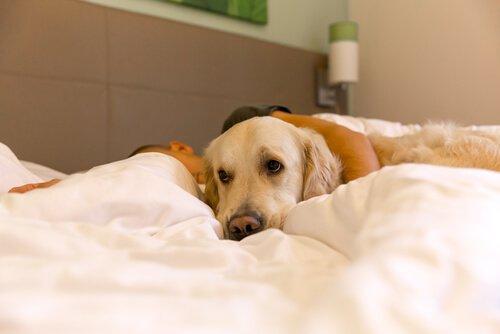 Cachorro dormindo com seu dono