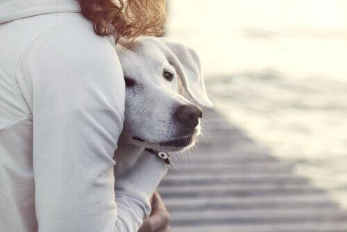 Abraços para acalmar seu cão