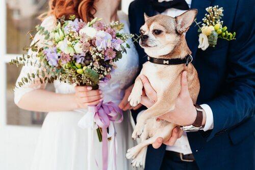 Cão em um casamento