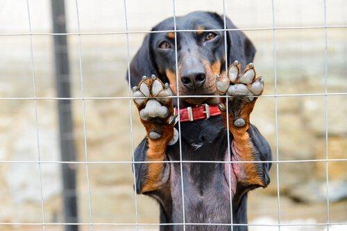 Reflexões sobre maus-tratos contra animais na Espanha