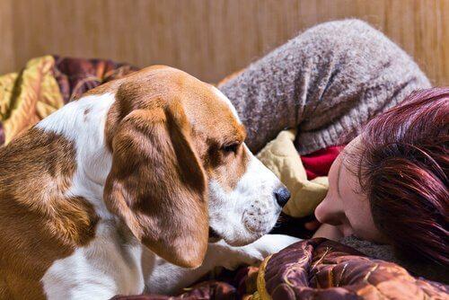 Cachorro com sua dona