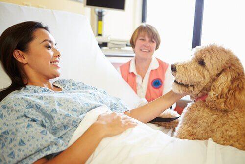Cachorro visitando paciente no hospital