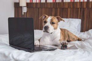 cão mexendo no notebook