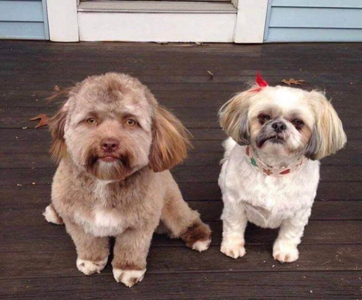 Yogi: o cachorro com feição humana