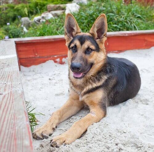 Como treinar o cão a usar a caixa de areia
