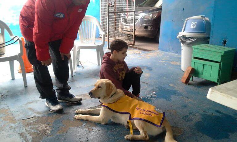 cão-guia e criança cega