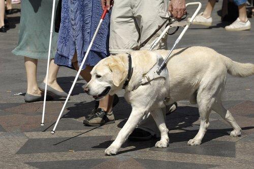 cão-guia ajudando cego a atravessar a rua