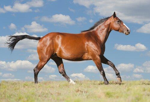 Cavalo quatro milha