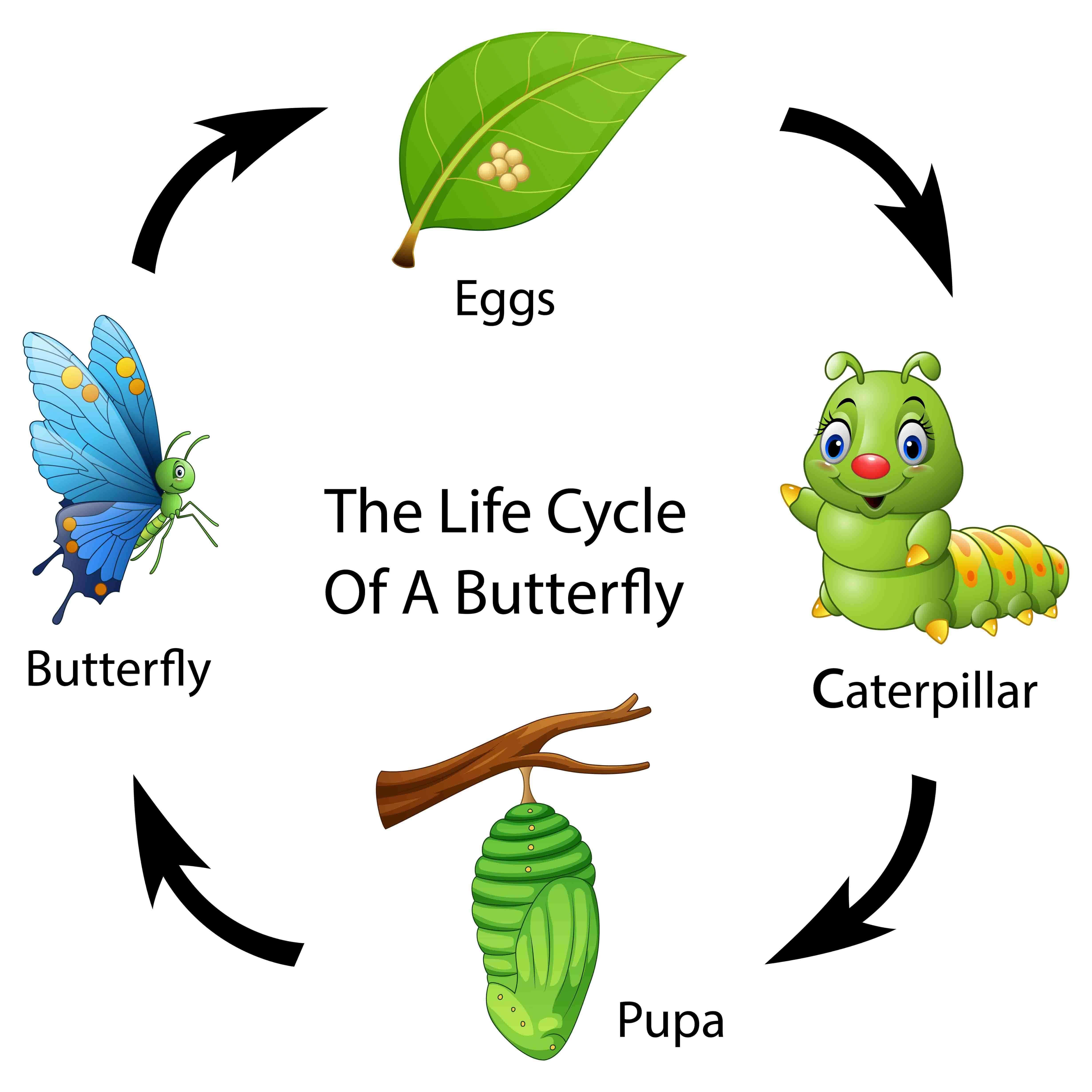 Ciclo circadiano dos insetos