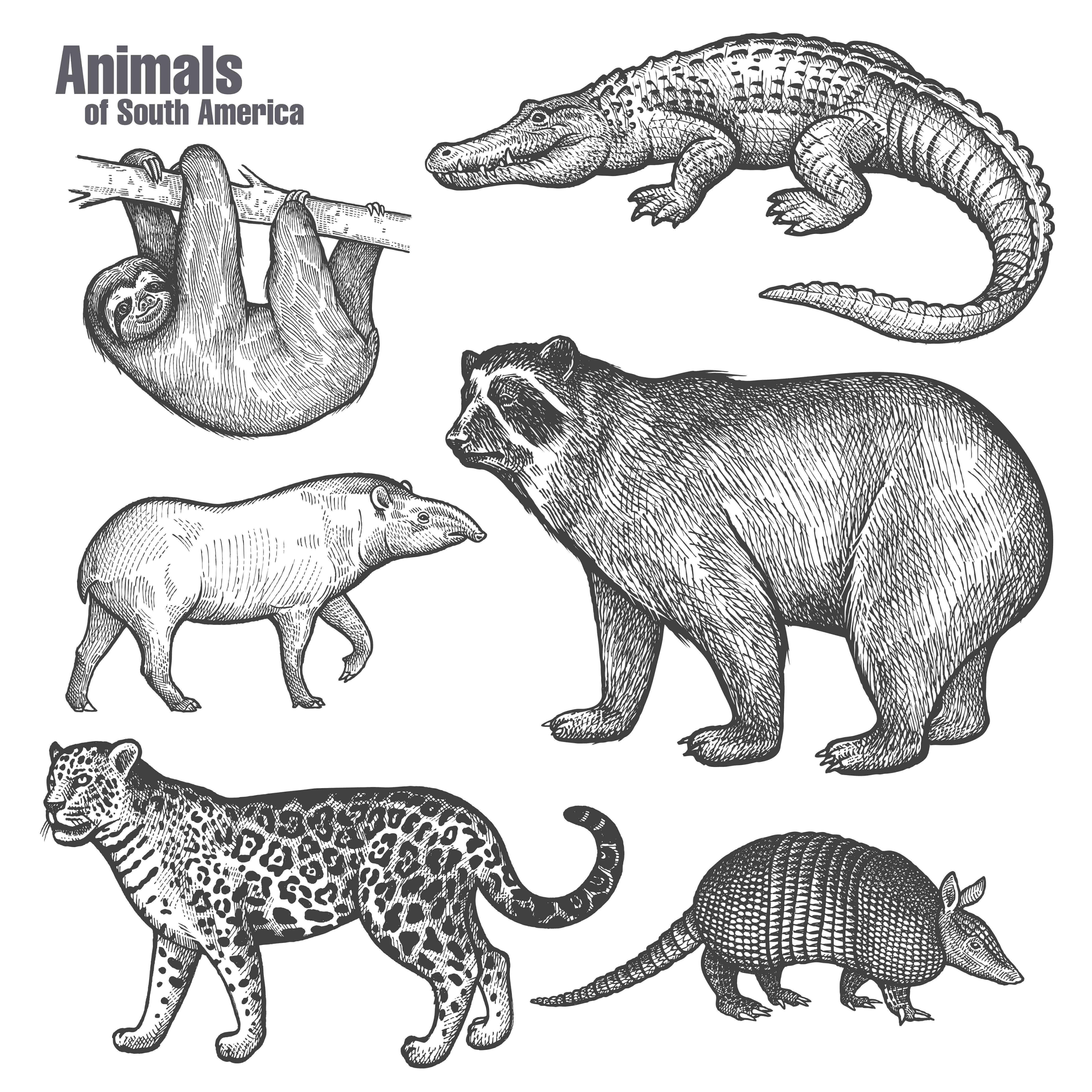 Ciclo circadiano dos mamíferos