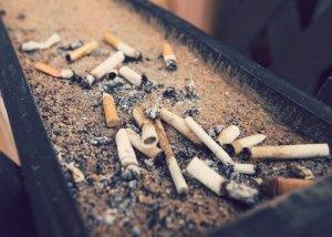 cigarro afeta os animais
