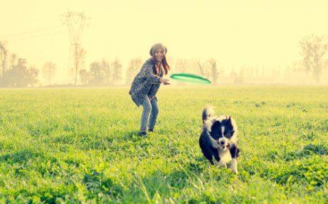 9 atividades divertidas para seu cão: saiba aqui