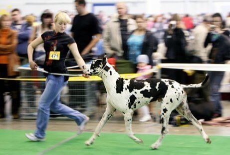 Competição de cães