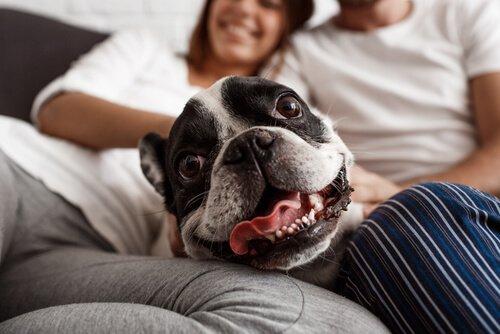 conexão entre cães e humanos