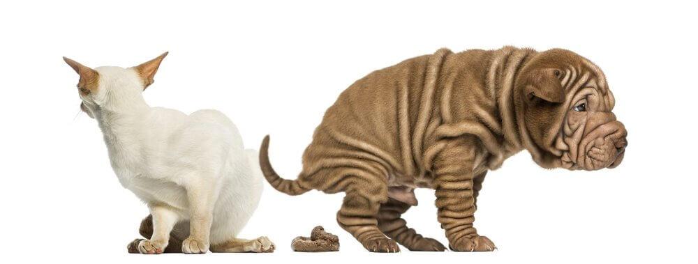 Como tratar a constipação em animais de estimação