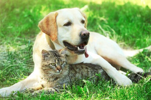 Tratamento da diabetes em cães e gatos