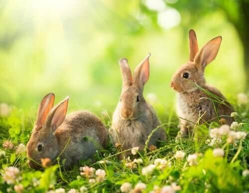 Dicas para socializar um coelho: saiba mais aqui