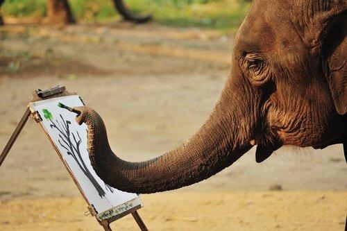 Elefantes que pintam: isso pode ser considerado maus-tratos?
