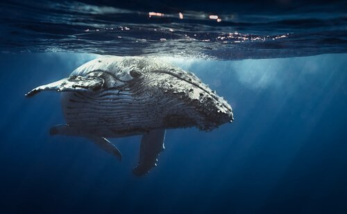 baleia na água