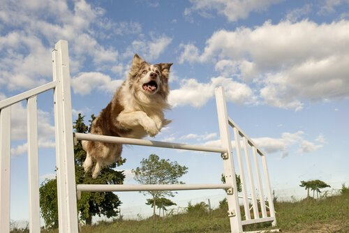 5 esportes caninos