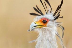Exemplos de aves de rapina
