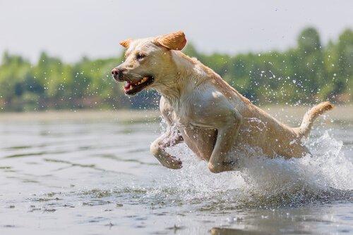 Como exercitar seu cão corretamente