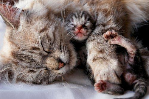 filhote e gata