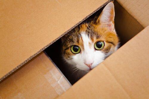Gato brincando com caixas