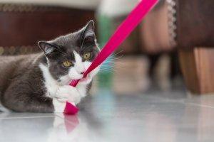 cuidar dos dentes do gato
