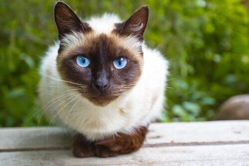 O enriquecimento ambiental para gatos