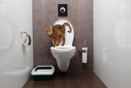 Gato na bacia sanitária