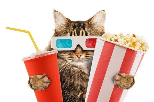 Gatinho no cinema