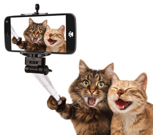 Os gatos no cinema: um passeio histórico