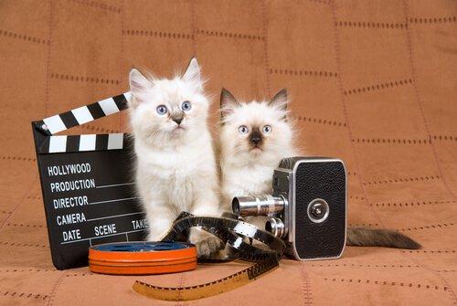 Gatos no cinema
