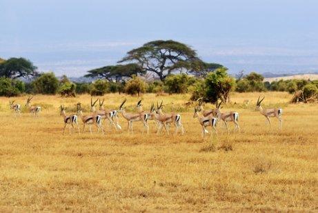 A migração no Serengeti
