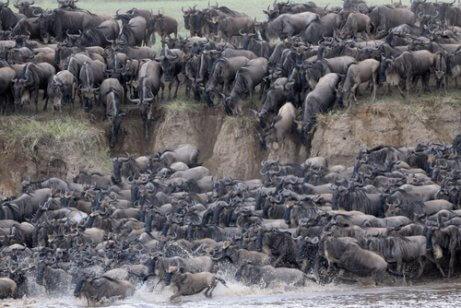 A grande migração no Serengeti: saiba tudo!