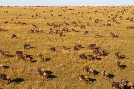 Grande migração no Serengeti