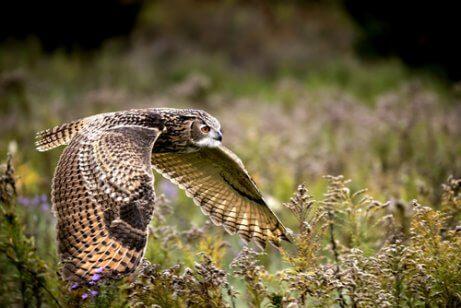 Bufo-real: características, comportamento e habitat