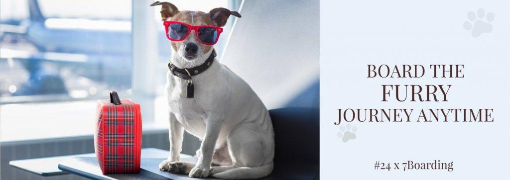 Conheça o hotel de luxo para cães na Índia