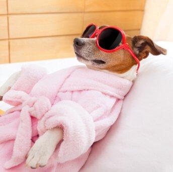 Cachorrinha de roupão rosa