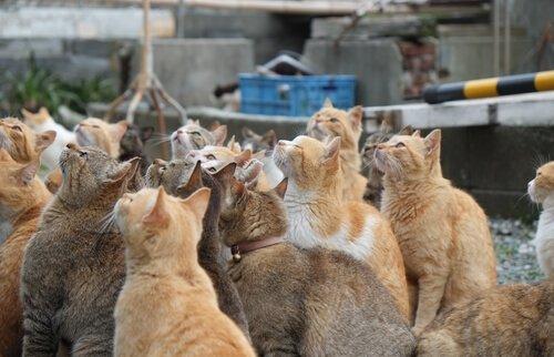 As ilhas dos gatos no Japão