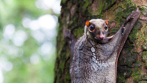 5 espécies de animais arborícolas