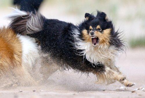 5 dicas para lidar com a agressividade do cão