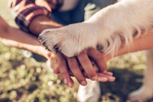 5 maneiras de demonstrar que ama seu cão