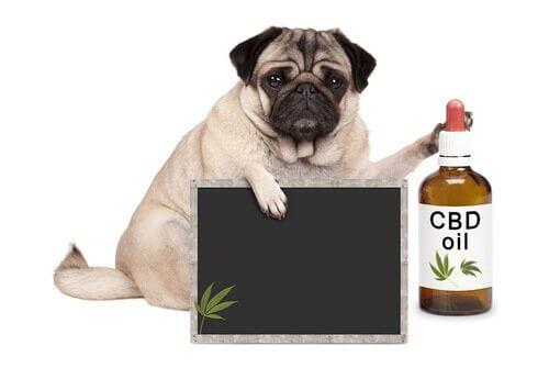 Medicina alternativa para animais de estimação