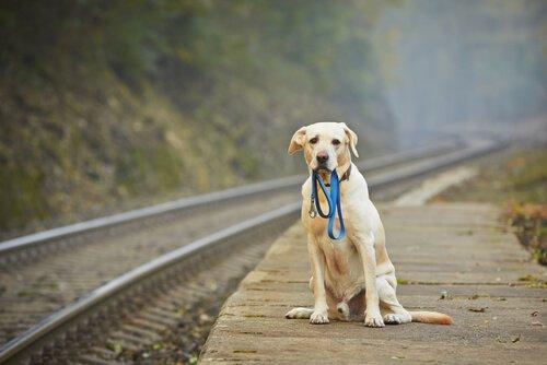 o que fazer com cão abandonado