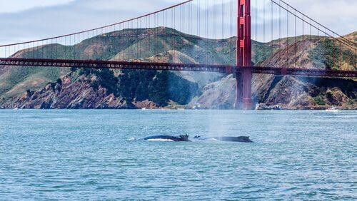 baleia em frente a ponte