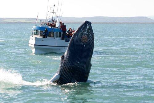 Países onde é possível avistar as baleias