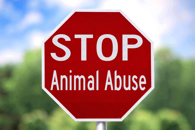 Placa: Pare com os maus-tratos contra animais